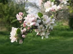 Avril En Fleurs De Guerlain L Air Du Printemps Lesplusbeauxparfums